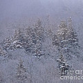 Winter Blues by Mim White