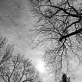Winter Branch by Mark Englert