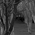 Winter Branches 1 by Pico Soriano