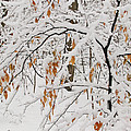 Winter Branches by Ann Horn