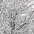 Winter Branches by Gwen Gibson