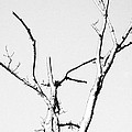 Winter Branches  by Maggy Marsh