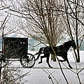 Winter Buggy by David Arment