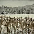 Winter By The Pond by Marina Kojukhova