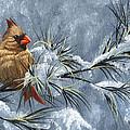 Winter Cardinal by Christopher Lyter