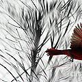Winter Cardinal by Heather Applegate