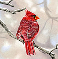 Winter Cardinal by Sarah Batalka
