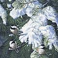 Winter Chickadees by Christopher Lyter