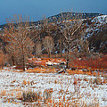 Winter Colors by Roena King
