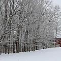 Winter  by Coralynn Gutierrez