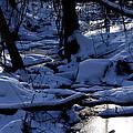 Winter Creek by Steven Livingston