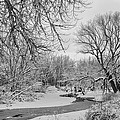 Winter Creek In Black And White by James BO  Insogna