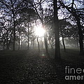 Winter Dawn Light Through Trees by Orla Madden