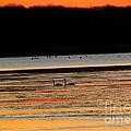 Winter Dawn Swans by Joshua Bales