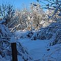Winter Day II by Cheryl Aguiar