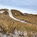 Winter Dune by Steve Gravano