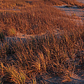 Winter Dunes Iv by Suzanne Gaff