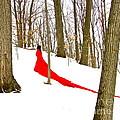 Winter Empress by Shakaya Leone