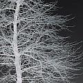 Winter Etching by Wide Awake Arts