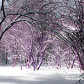 Winter Faeries by Barbara McMahon