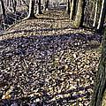 Winter Fall On The Trail by LeeAnn McLaneGoetz McLaneGoetzStudioLLCcom