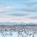 Winter Farm Field by Heather Allen