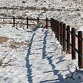 Winter Fence by David S Reynolds