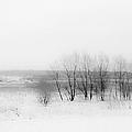 Winter Fields. Monochromatic  by Jenny Rainbow