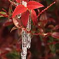 Winter Flower by Ginny Barklow