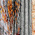 Winter Foliage Tin 13134 by Jerry Sodorff