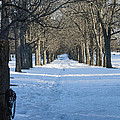 Winter Foot Prints by Ruth H Curtis