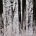 Winter Forest 1 by Heiko Koehrer-Wagner