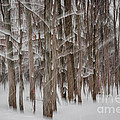 Winter Forest Abstract II by Elena Elisseeva