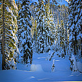 Winter Forest by Inge Johnsson