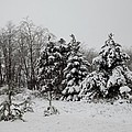 Winter Forest by Linda Kerkau