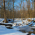 Winter Forest Stream by Harold Hopkins