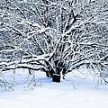 Winter Fresh by Alexander Senin