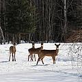 Winter Friends  by Jeffrey Akerson