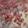 Winter Fruit by Marilyn Cornwell