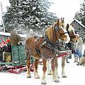 Winter Fun by Peggy  McDonald