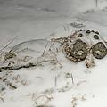 Winter Garden Guardian by Susan Capuano