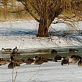 Winter Geese - 01 by Larry Jost