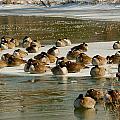 Winter Geese - 06 by Larry Jost