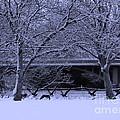 Winter Geese Retreat by Carol Groenen