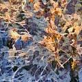 Winter Glory by Dan Sproul