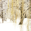 Winter Gold by Julie Palencia