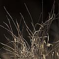 Winter Grass 2 by Yulia Kazansky