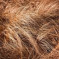 Winter Grass by Tom Singleton