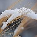 Winter Grasses IIi by Karen Lambert