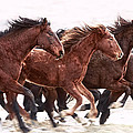 Winter Hardened Wild Horses by Wes and Dotty Weber